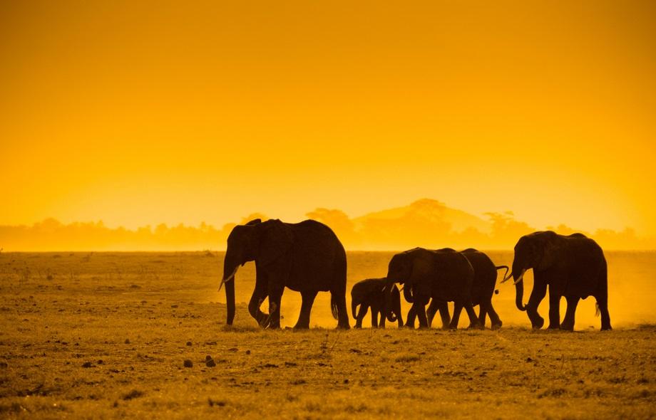 elephants dans la savane